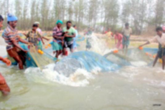 Dugong Rescue,Keezhathottam,26 July 2018