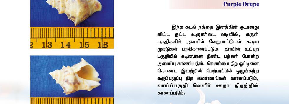 57 - 64_Page_3.jpg