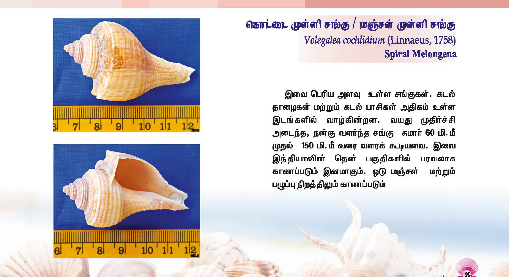 33 - 40_Page_3.jpg