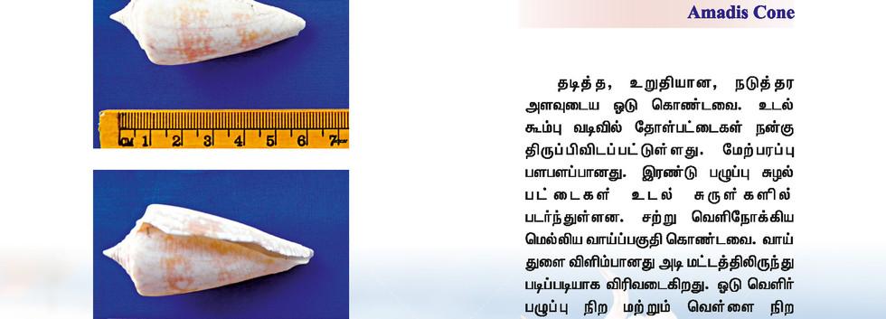 65 - 72_Page_7.jpg