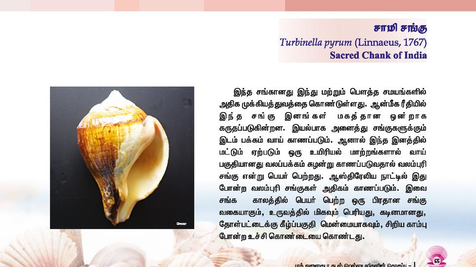 65 - 72_Page_1.jpg