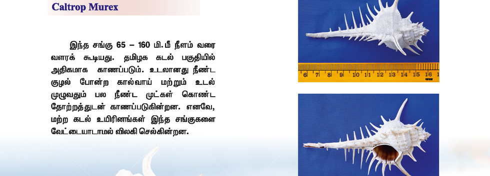 33 - 40_Page_4.jpg