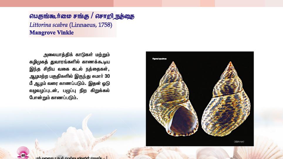 41 - 48_Page_8.jpg