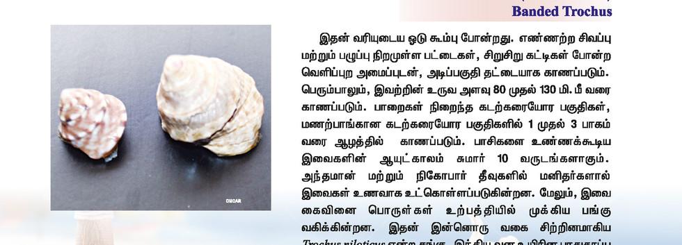 25 - 32_Page_1.jpg