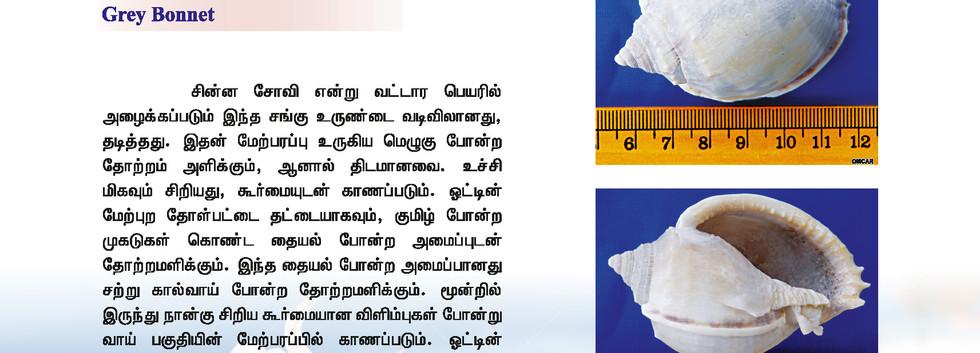 49 - 56_Page_8.jpg