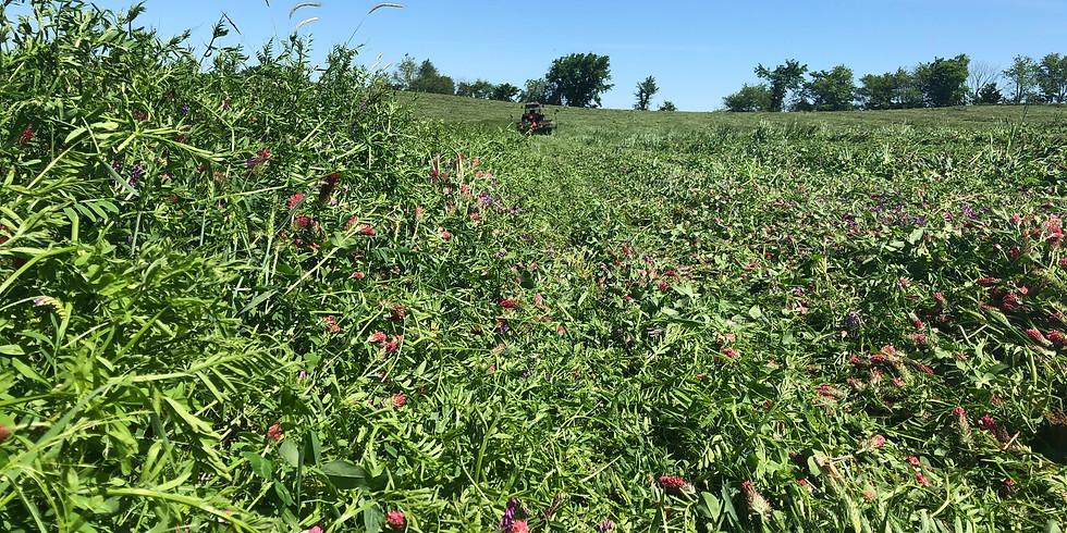 MWCD Cover Crop Overview