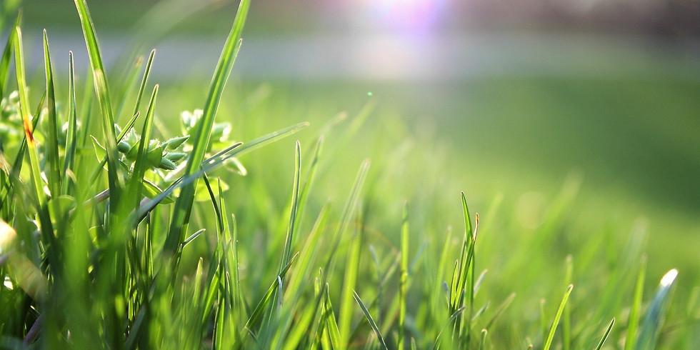 Natural Lawns