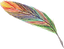 2021-0510-plume-multicolore.png