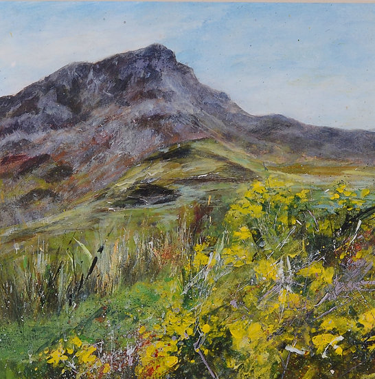 Welsh Mountain Gorse