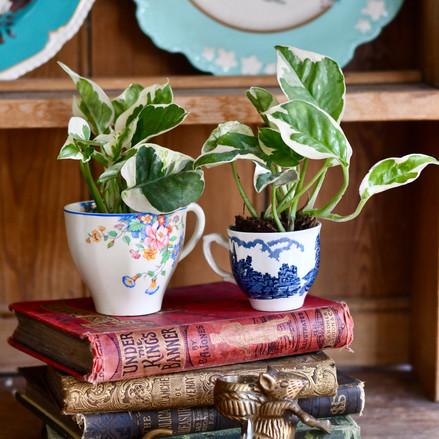 Houseplants - the perfect gift!