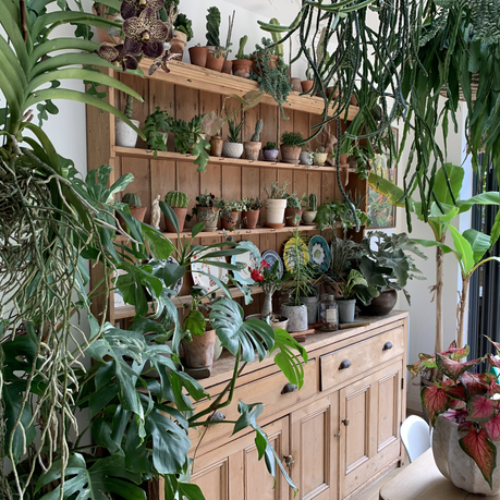 Plant Passions: Indoors Plants