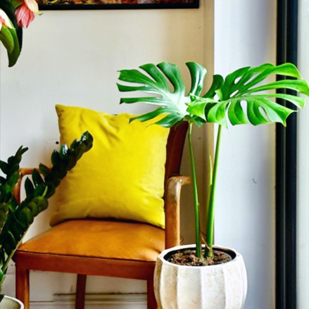 Embrace the power of indoor plants for an inspired return to the office!