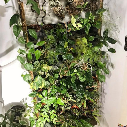 Bring Nature Inside Your Home with an Indoor Plant Wall