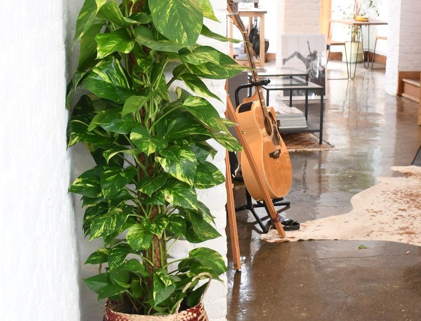 Pothos bush epipremnum aureum, house plants, indoor plants for sale, easy care, seagrass planter