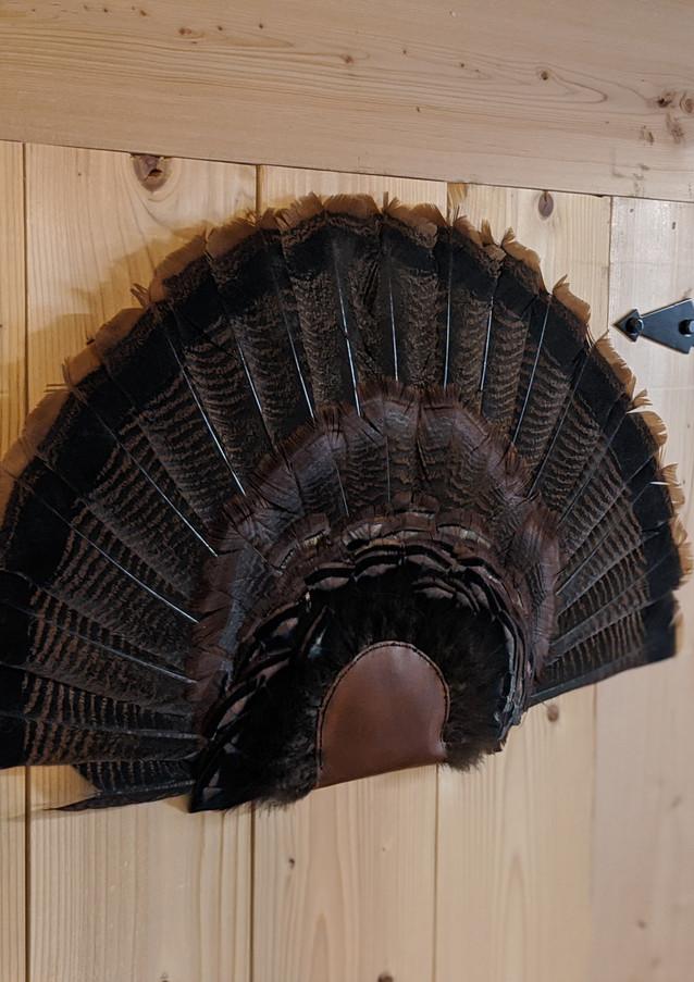 Close Up Of Turkey Fan Mount