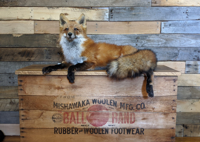 Fox Mounted on Vintage Wooden Boot Box