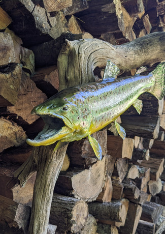 Trout Wall Mount Close Up
