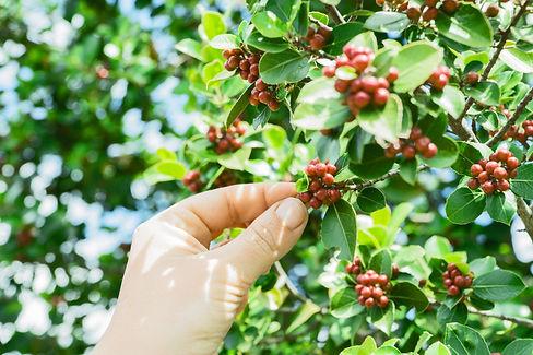 Farming Coffee Beans.jpg
