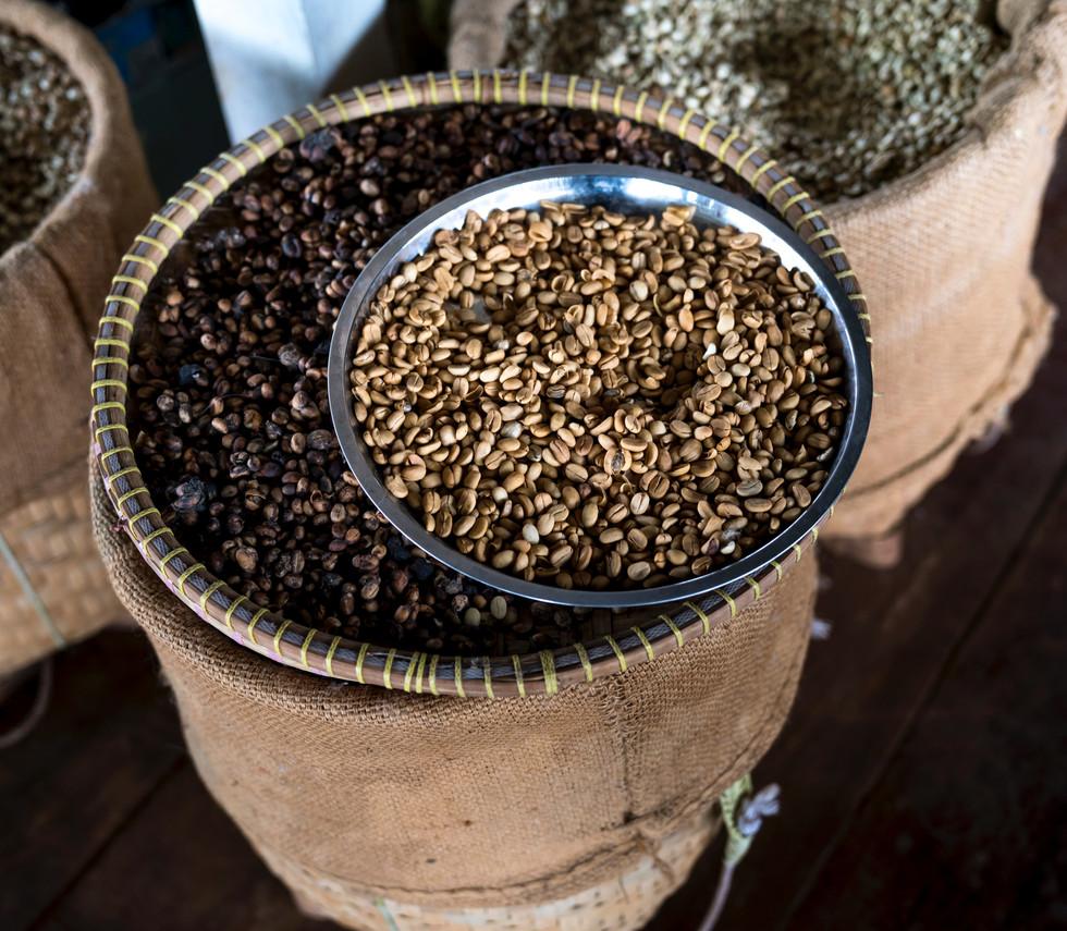 Coffee Bean Harvest.jpg