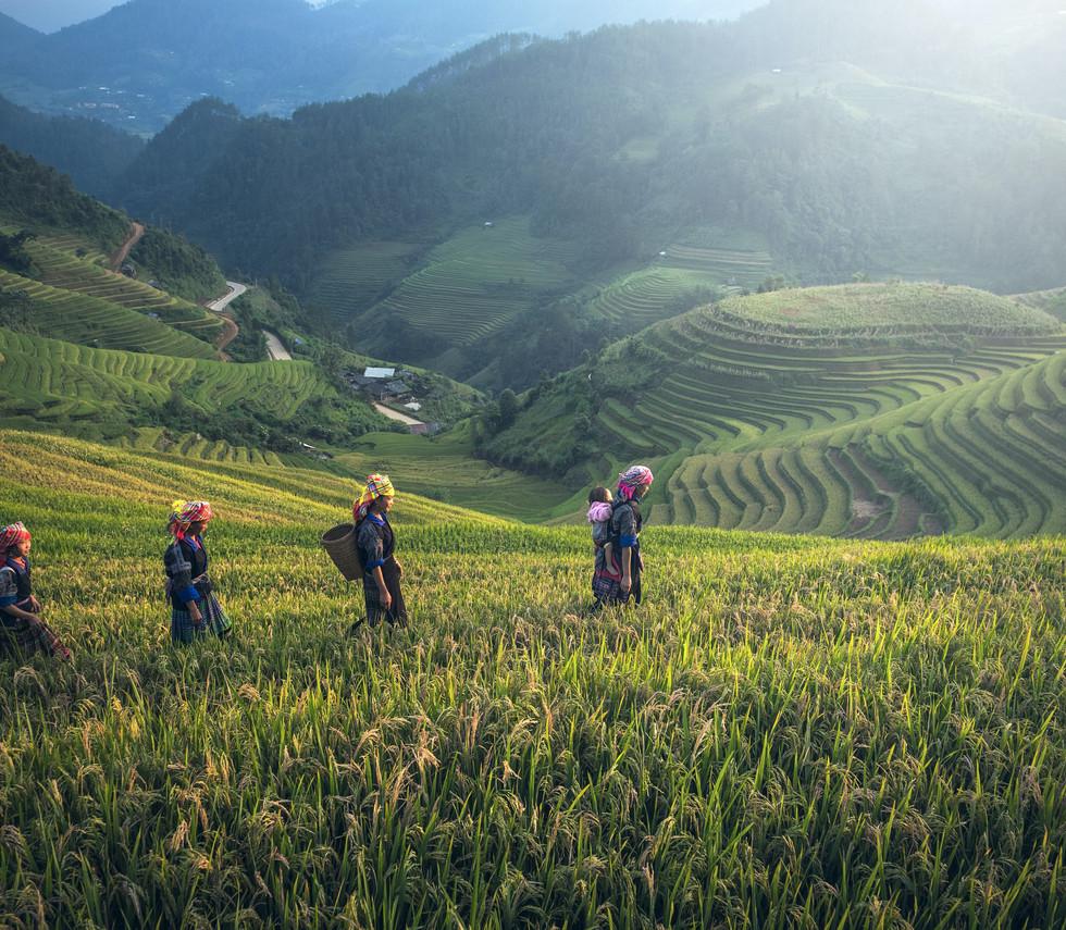 Missionary Coffee Farmers.jpg