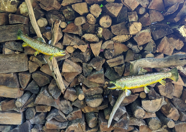 Trout Mounts on Wood