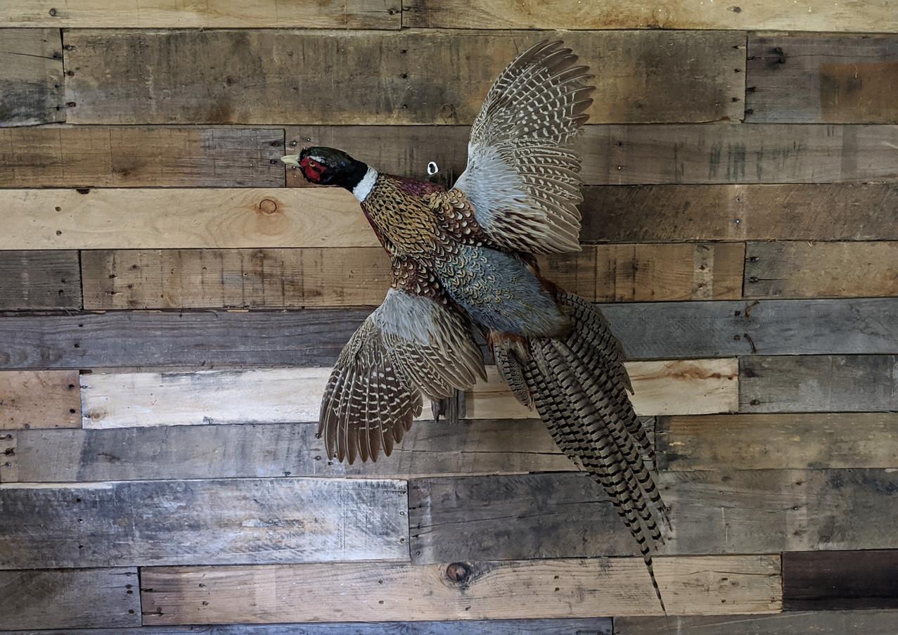 Flying Pheasant Wall Mount