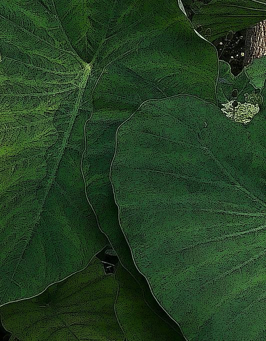 leaves big and green.jpg