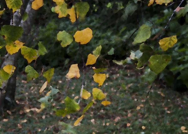 leaves-1bigger_edited.jpg