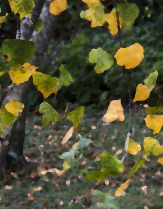 leaves floating 534 x 682.jpg