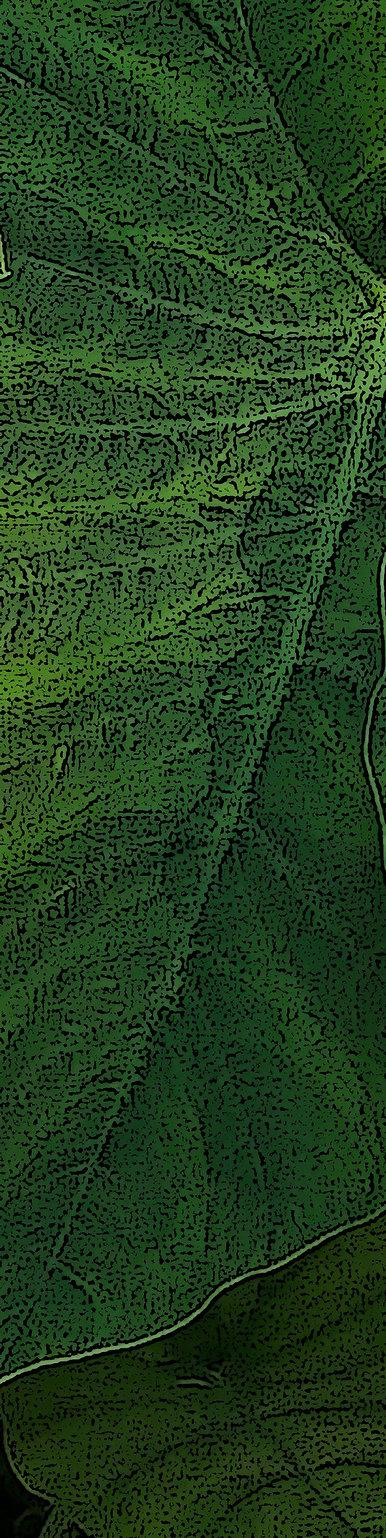 leaves big and green crop1.jpg