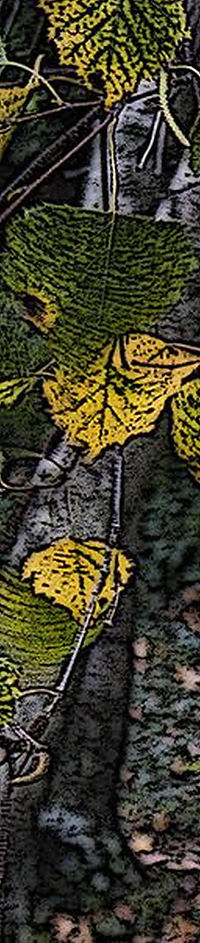 alternate-leaves--Bbcrop5 (shorter)c1.jp