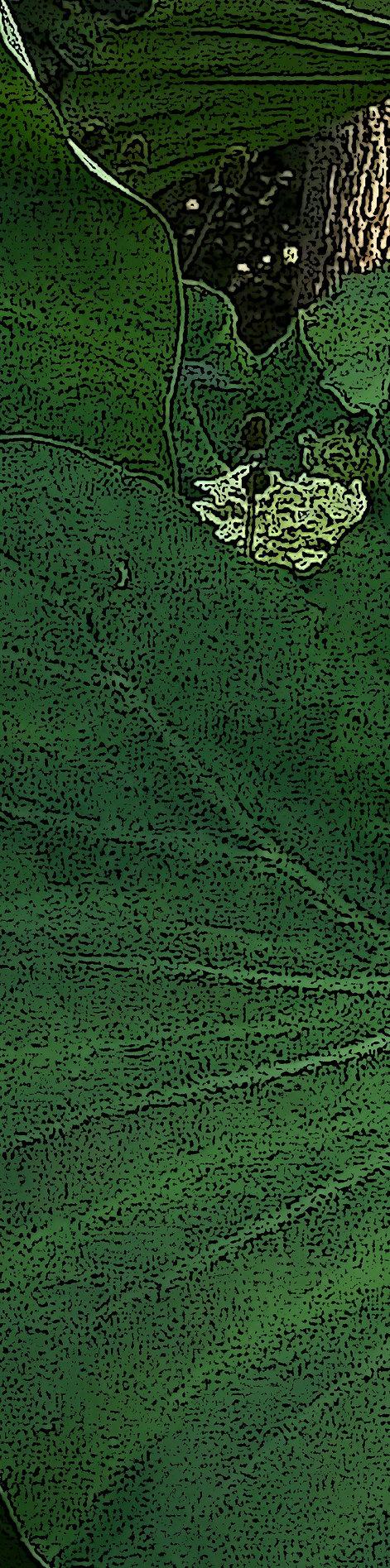 3 (leaf pre pale) c1.jpg