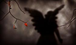Angel Leaf
