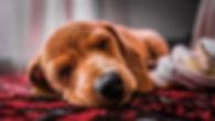 animal-animal-photography-asleep-3038776