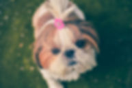 animal-cute-dog-61372.jpg