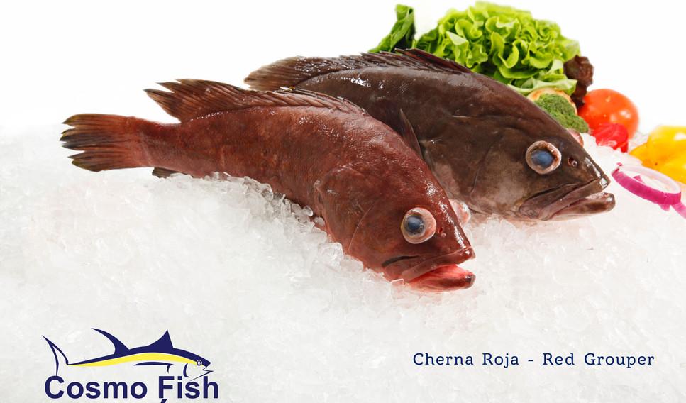 Cherna Roja