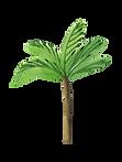 palmeras 1 y 2 -01.png