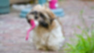adorable-animal-animal-portrait-422212.j