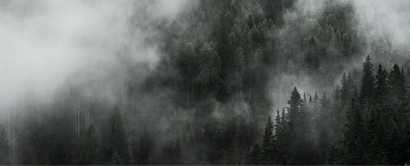 dark-fog-over-woods-picjumbo-com_edited.png