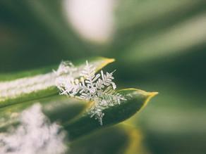10 ways Winter can life coach you!