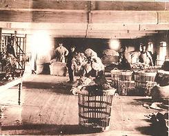 wool-sorting-41714.jpg