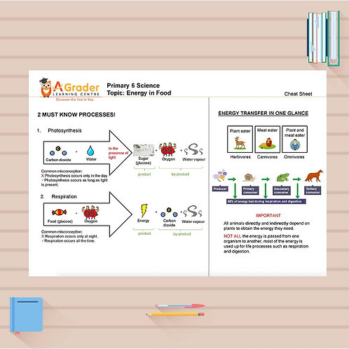 P6 Science Cheat Sheet - Energy in Food