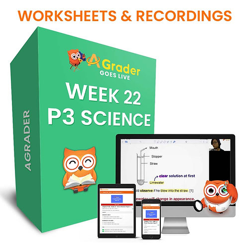 P3 Science (Week 22)