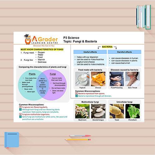 P3 Science Cheat Sheet - Fungi & Bacteria