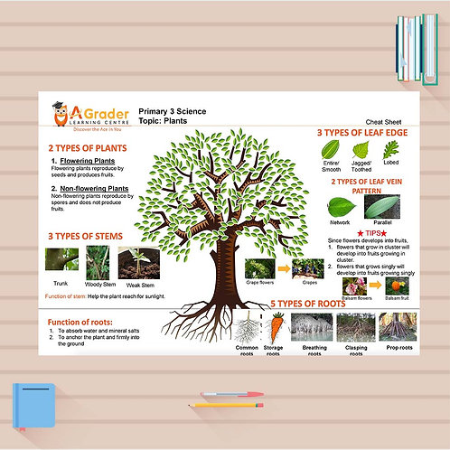 P3 Science Cheat Sheet - Plants