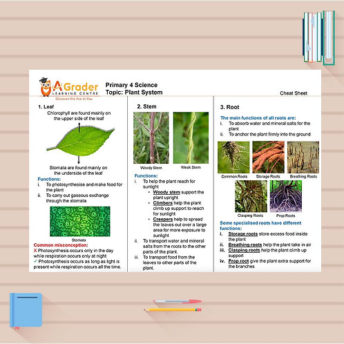 P4 Science Cheat Sheet - Plant Systems