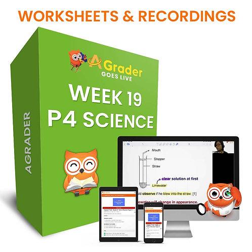 P4 Science (Week 19)