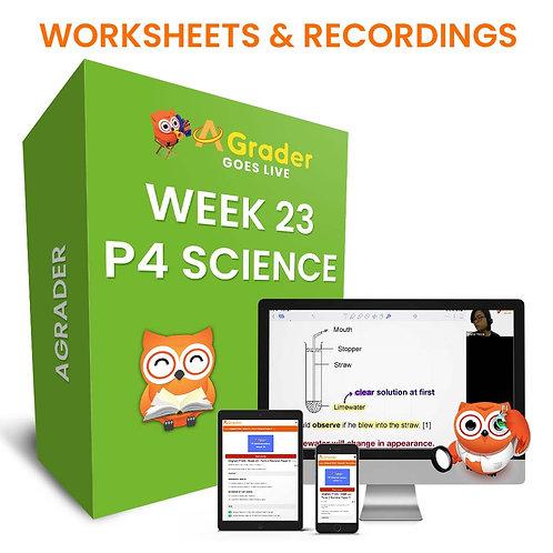 P4 Science (Week 23)