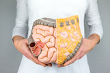 The digestive system is your second brain - keep it healthy