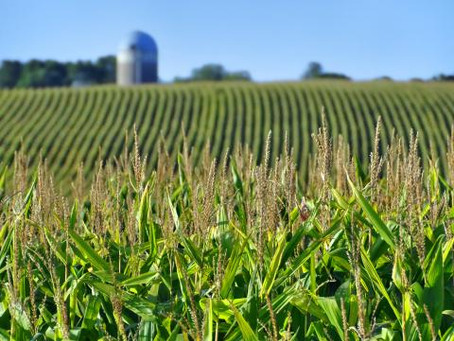 Everything Industrial Agriculture Isn't Telling You About GMOs